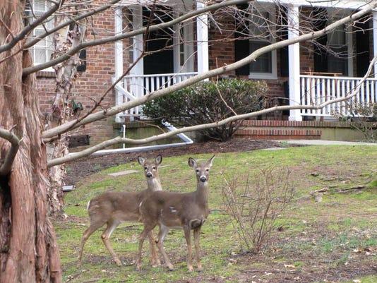 033116-it-oh-deer.jpg