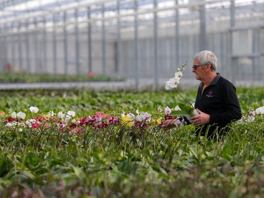 Floricultura Pacific general manager Don Howell walks