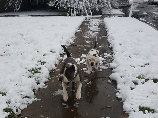 Dogs experienced snow for the first time in Corpus