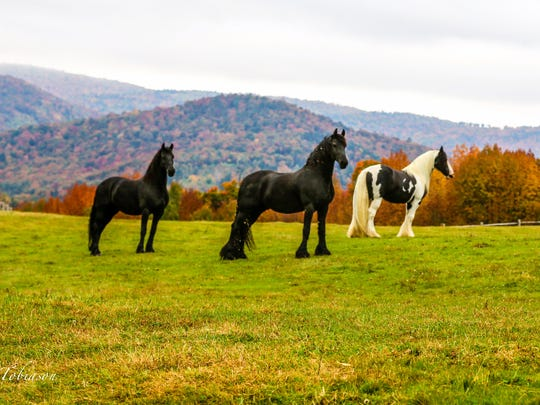 Horses in Barnard.