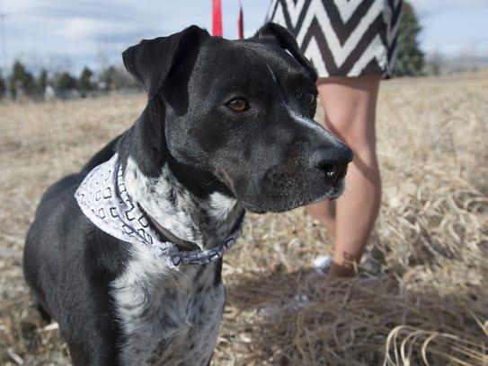 Candace Braden's dog, Finn, ingested a marijuana edible