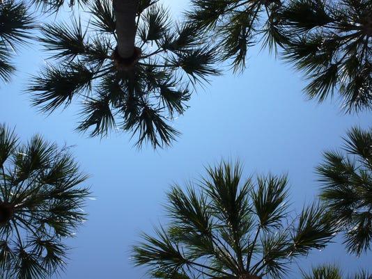 2015 1344982151-palmtrees.jpg_20070728.jpg