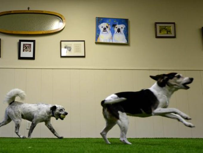 Dogs run and play with each other in a playroom at The Hound House. The Hound House, 3318 North Market, opened for business in July of 2014.