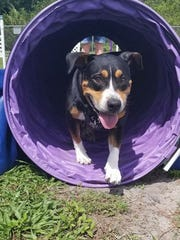 Jillian makes her way through the purple agility tube.