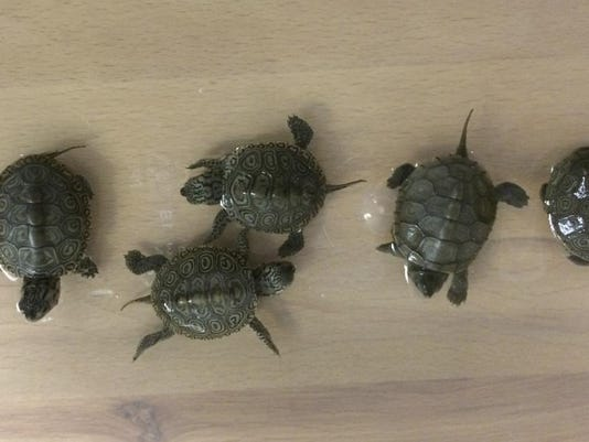 Turtle Smuggling Charges (2)