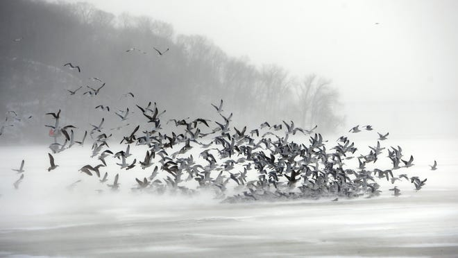 A flock of birds flies against frigid winds during an arctic cold front earlier this year on Irondequoit Bay.