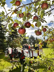 Eric Fischbach drives his father's team of paint horses, Roscoe and Annie, and a wagon of riders through Hidden Cove Orchard in 2014.