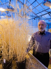 Russell Freed, professor emeritus at MSU and international agronomist, poses with a sample of Spartan barley he grew at a greenhouse on campus in 2014.
