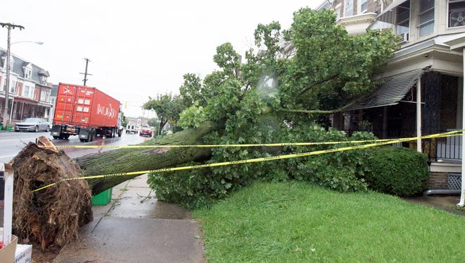 A fallen tree block a sidewalk in the 100 block of Richland Avenue Wednesday, Sept. 6, 2017. Bill Kalina photo