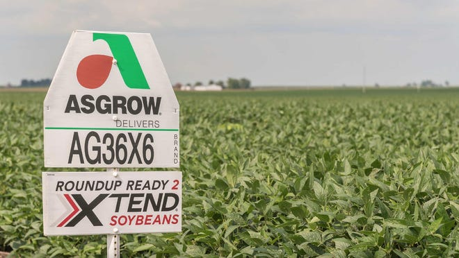 The federal court rules the controversial herbicide dicamba is no longer legal. [Photo by Midwest Center for Investigative Reporting