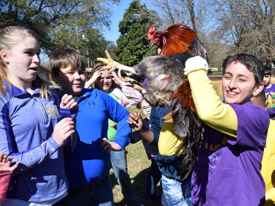 Fifth-grader Bailey Simmons (right), 10, caught the rooster of the St. Frances Cabrini School Courir de Mardi Gras held Friday. Bailey came prepared with gloves.