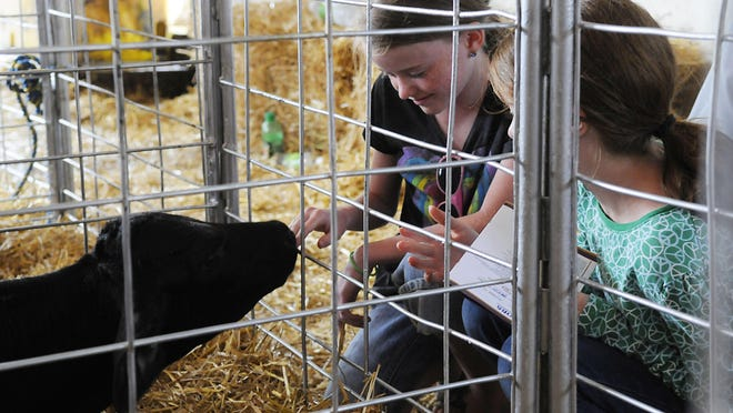 Nora and Ella Renner pet the calves Saturday at Stearns County Breakfast on the Farm at Rohe Dairy near Melrose at Rohe Dairy.
