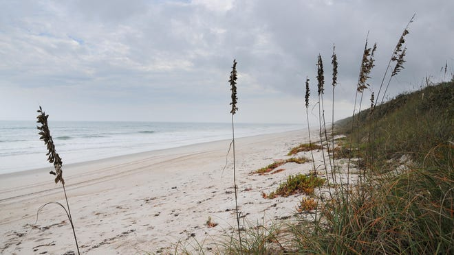 Sea oats grow on the dunes at Playalinda Beach, part of the Canaveral National Seashore.