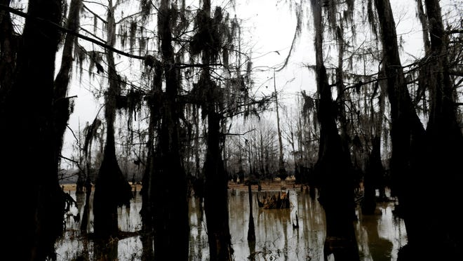 Dense stands of cypress trees make Lake Bistineau a special place to fish. It's the No. 2 fishery in North Louisiana.
