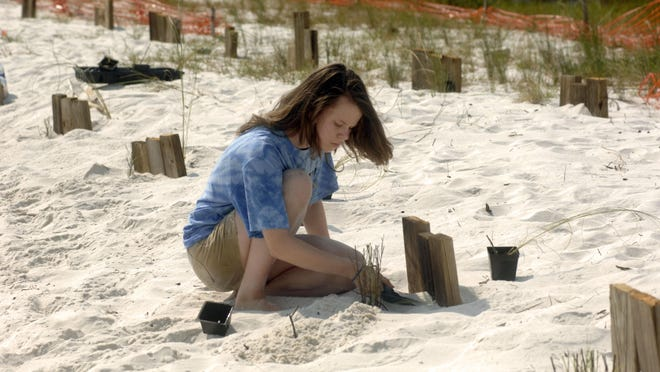 Clare Quina helps plant Seaoats at Deadman's Island in Gulf Breeze. The vegetation planted will help stabilize the North end of the island.