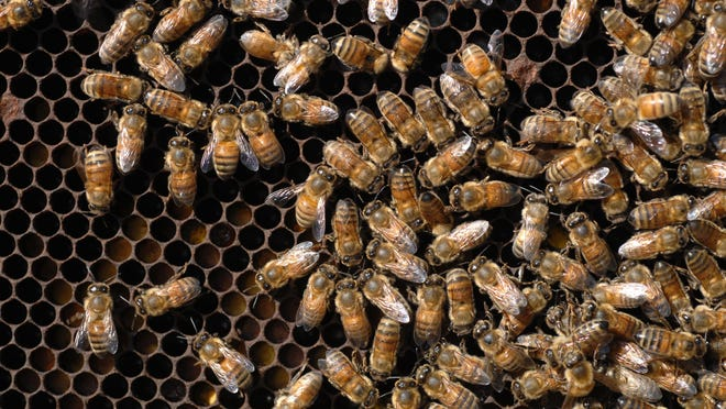 The Pensacola International Airport is considering allowing the placement of honeybee hives on its property.