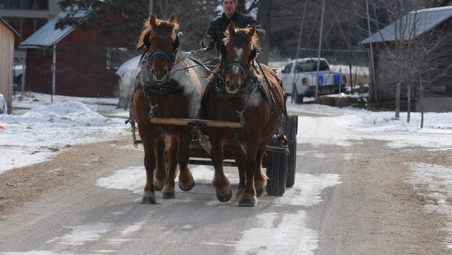 Mat Boerson heads down the road to get to get firewood with field horses Valarie and Vonda. Sustainability is one of the most important aspects to Boerson Farm.