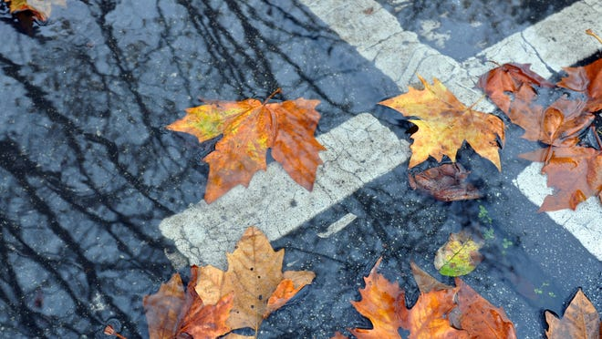 Leaves wait for a storm drain opening to clear at the corner of Clay Street and Lincoln Avenue in Salinas. Rain showers are expected Wednesday through the end of the week.