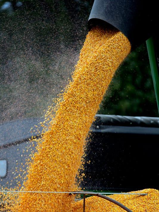 Corn Harvest_Fran.jpg
