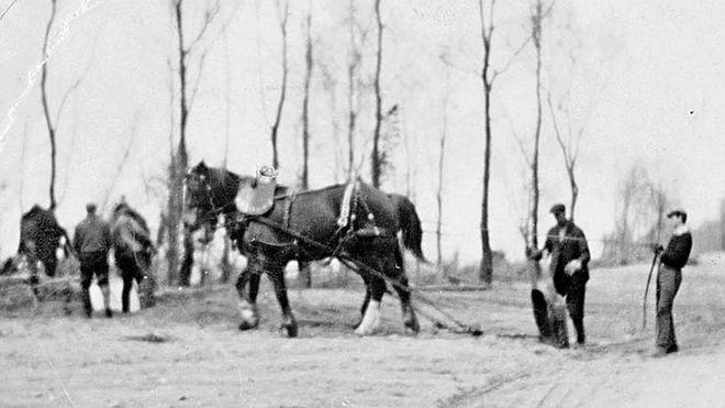 Draft horses on Presque Isle working on a road.