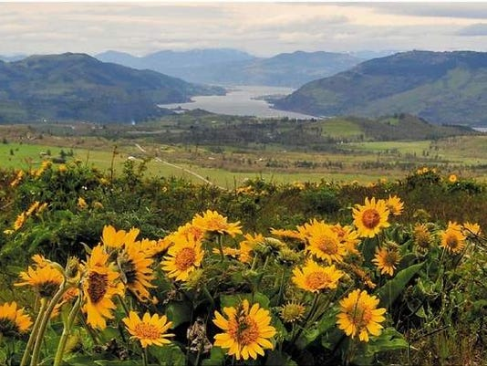 McCall Point trail in the Columbia River Gorge