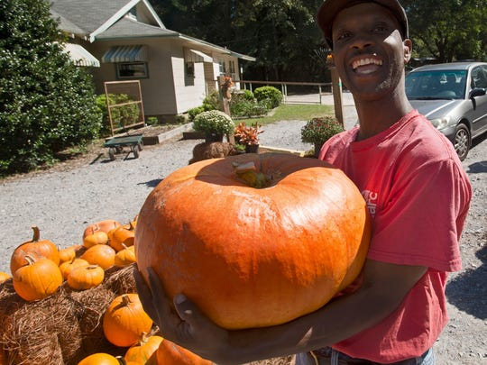 Wilie Sams shows off one of the pumpkins for resale at the ARC Gateway Nursery on Fairfield Drive.