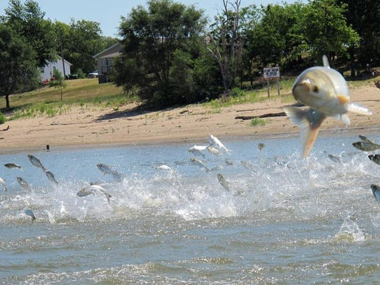 Asian carp find sioux falls for South dakota out of state fishing license