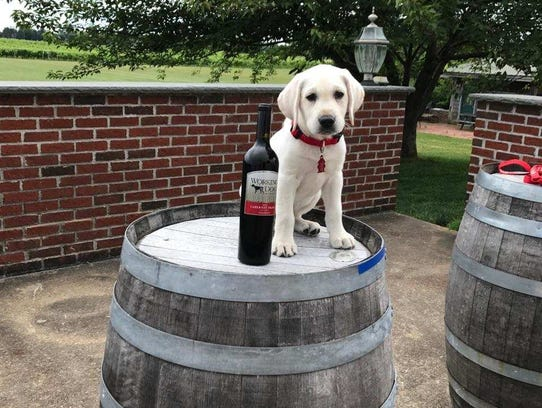 Working Dog Winery in Robbinsville.