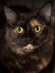 May is available for adoption at Friends for LIfe,