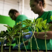 Physicians chime in on medical pot
