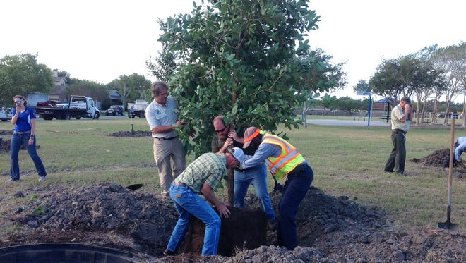 Members of the Corpus Christi Parks and Recreation Department and the Tree Advisory Committee planted the first of 16 trees in Breckenridge Park on Friday, Nov. 4, 2016.