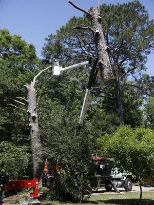 Jennifer Portman's tree gets cut down Tuesday, May 1, 2018.