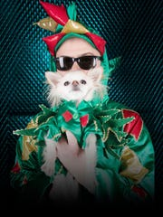 "Piff the Magic Dragon and his dog, Mr. Piffles, became famous after appearing on NBC's ""America's Got Talent."""