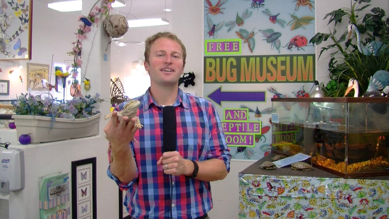 Join Reporter Josh Farley for a tour of the Bremerton Bug Museum this week, as it prepares for its yearly Halloween festivities, plus four other stories that you just gotta know.
