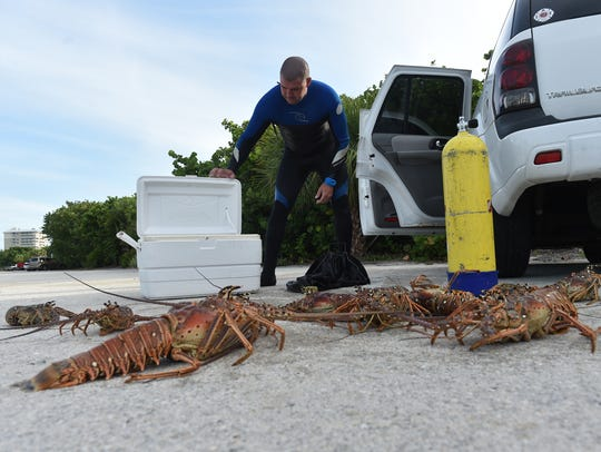 Divers search for lobster treasure during the first