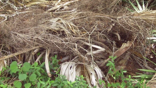 Brown, dry palm fronds and flower stalks can be added to compost piles. However, they are usually slow to compost and should be reduced to smaller pieces by shredding or chipping before added to a compost pile or bin.