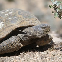 DHS joins Coachella Valley wildlife conservation plan