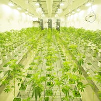 First marijuana cultivation facility in Southern California opens in Desert Hot Springs