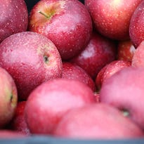 Your guide to apple varieties now at tailgate markets