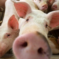 Trump offers farmers two pigs in a poke in exchange for China tariffs