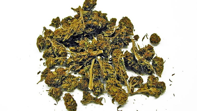 Cannabis, commonly known as marijuana is a psychoactive