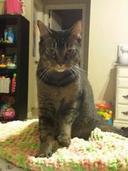 Lulu is missing from the area of Rattlesnake Hammock Road and Santa Barbara Boulevard.