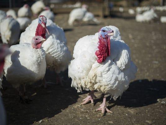 US-HOLIDAY-THANKSGIVING-TURKEY