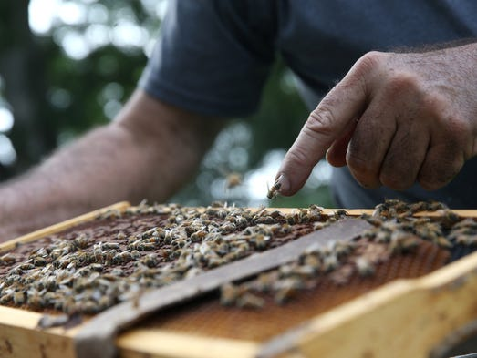 Tony Hogg started bee keeping 15 years ago for his