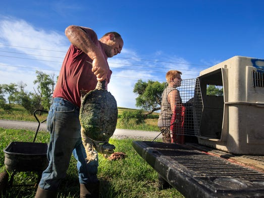 Brian Forbes and J.C. Covert put harvested turtles
