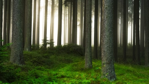 Do you have a forest stewardship plan?