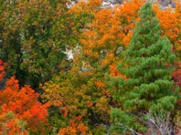 Photos: Fall colors around Arizona