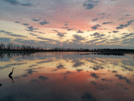 An April Allyson Abel image from Slaughter Creek, within the Prime Hook National Wildlife Refuge near Milton.