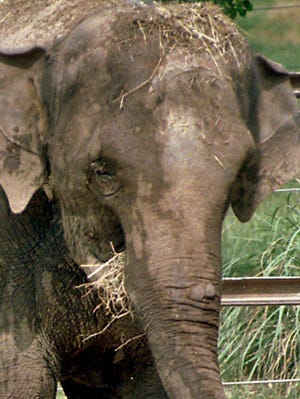 No elephants were outside when an unidentified woman slipped into their enclosure late Monday at Denver Zoo.