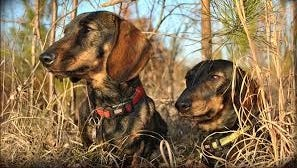 Residents near and within Blackwater Wildlife Management Area want the state to stop dogs from hunting deer on their property.
